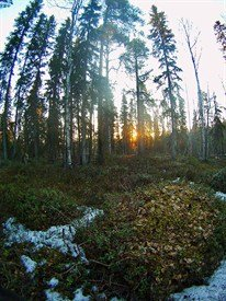 russia forest 0902_206x275