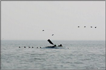 seaduck%20hunting%20layout%20boat_350x233